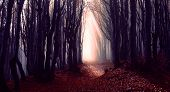 Misty Forest Path Background - Spooky Trees In A Dark Woods  Trail With Sun Beams At Autumn Season - poster