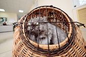 Old Beautiful Cat Sitting In An Animal Basket Against The Backdrop Of A Veterinary Clinic. poster