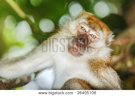 Portrait of the funny monkey
