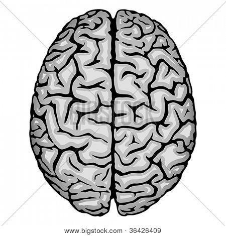 Human brain. Vector format EPS 8, CMYK.