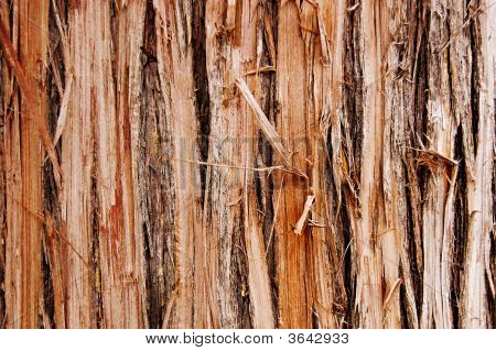 Shredded Wood Texture