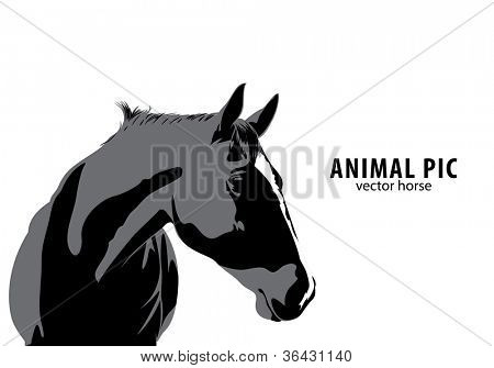 Vector horse on white background