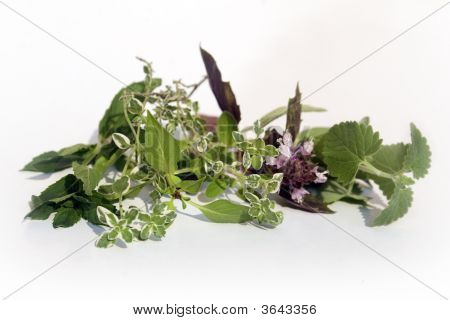 Fresh Herbs On White