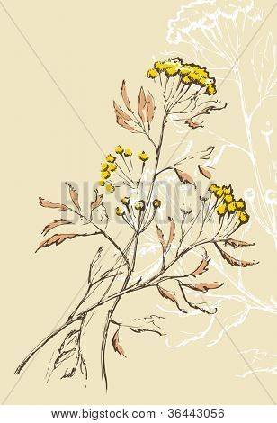Tansy flowers illustration / floral background