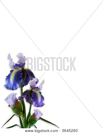 Iris Isolated Corner Design Watercolor