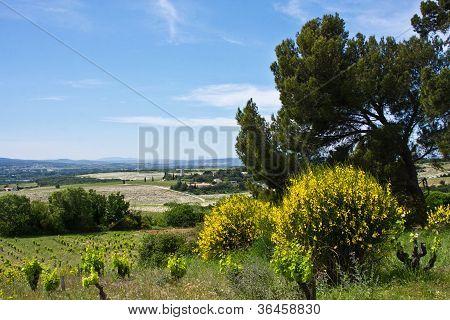 Ch�teauneuf-du-Pape Landscape