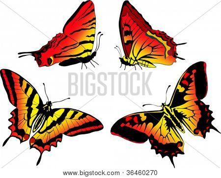 illustration with four red and yellow butterflies