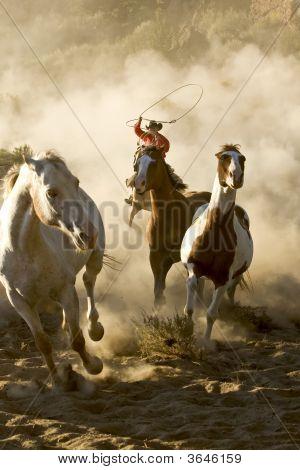 Cowboyss Wild Adventure