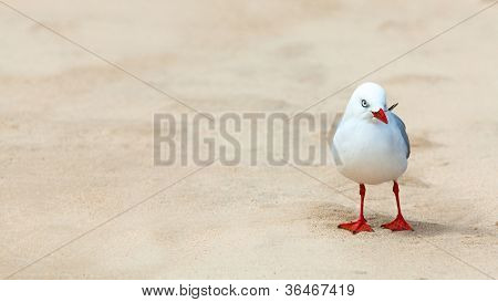 Wildlife photo of a cute seagull