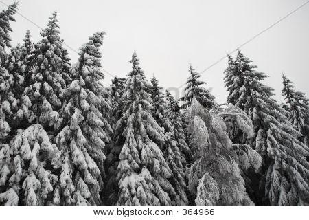 Snow Landscape #10