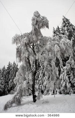 Snow Landscape #11