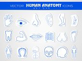 pic of autopsy  - Human anatomy website icons set - JPG