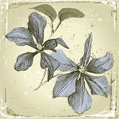 hand drawn clematis flowers in retro style