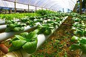 stock photo of hydroponics  - planting hydroponics - JPG