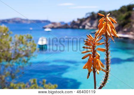 Tropical Orange Flower