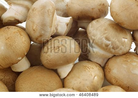 background of a bunch of fresh champignon mushrooms