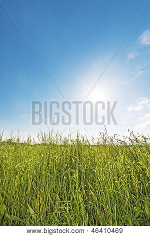 Meadow Backlit Vertical