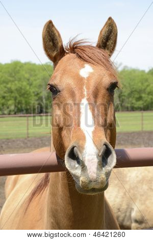Closeup Of A Horse Head