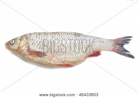 Fresh raw fish ide on a white background