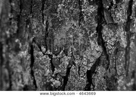 Aple Tree