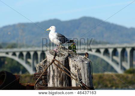 Gull Bridge