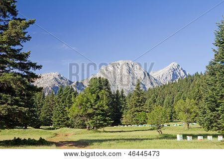Meadow, Forest, And Mountain