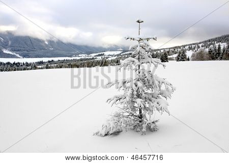 pine tree on snowy meadow in mountains