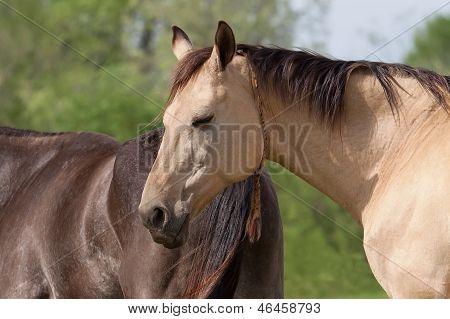 Horse Sleeping Outdoors