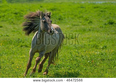 Wild horse running in a sunny meadow