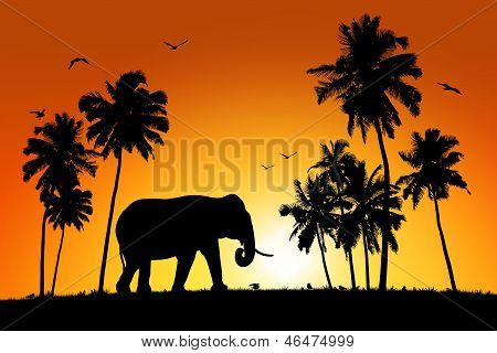 Lonely Elephant On Tropical Sunset Background