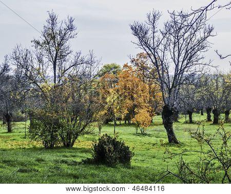 Fall Rural Scene