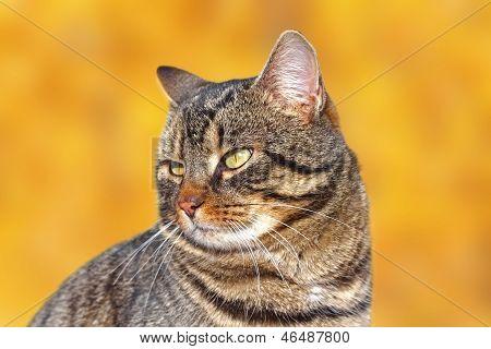 Retrato de um gatinho