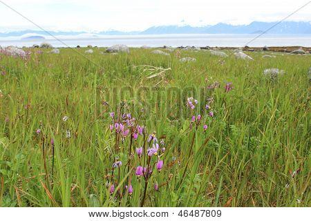 Alaska Beach Meadow with Wildflowers
