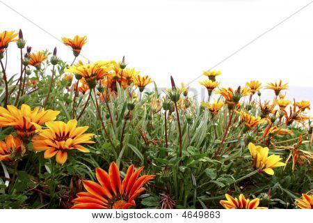 Flowers_white_sky