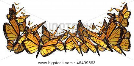 Buttefly frontera