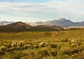 pic of superstition mountains  - View of Arizona - JPG