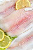 image of pangasius  - Pangasius hypophthalmus Iridescent shark with lemons close - JPG