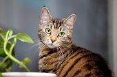 pic of festering  - Tabby cat and flower on the window - JPG