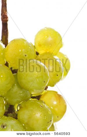Wet Green Grape Macro