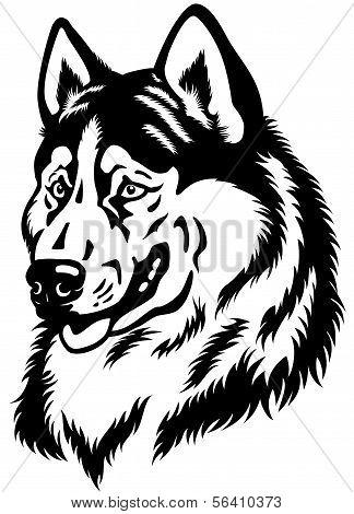 Siberian Husky Kopf schwarz weiß