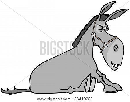 Stubborn donkey