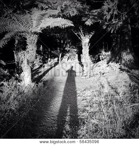 Shadow cast by photographer in forest