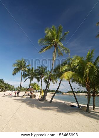 Tropical beach with Palm Tree on Sentosa Island near Singapore