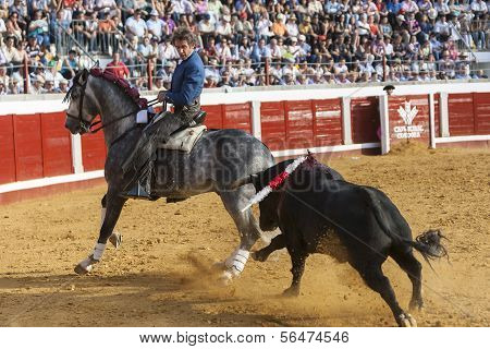 Spanish bullfighter on horseback Pablo Hermoso de Mendoza Riding sideways in a difficult maneuver wh