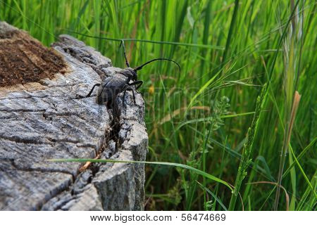 Beetle on a cut tree