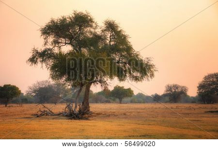 Landscape in dusk, South Luangwa National Park, Zambia, Africa