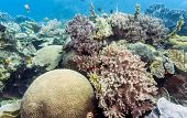 Bunaken National Marine Park.indonesia