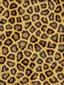Animal Fur pattern and texture