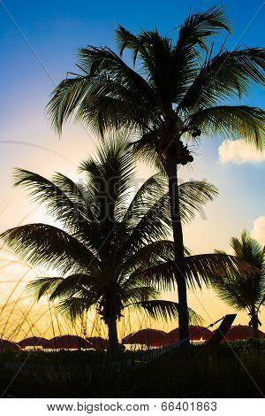 Beautiful sunset over sea beach with palmtree silhouette