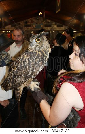 MUSKOGEE, OK - MAY 24: A handler shows a large owl trained to perform at the Oklahoma 19th annual Renaissance Festival on May 24, 2014 at the Castle of Muskogee in Muskogee, OK